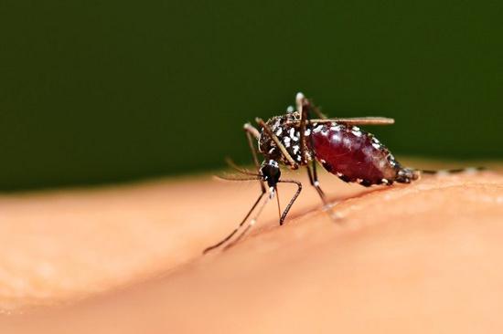 Nằm mơ thấy muỗi