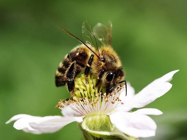 Mơ thấy con ong có ý nghĩa gì, đánh con lô đề nào trúng?